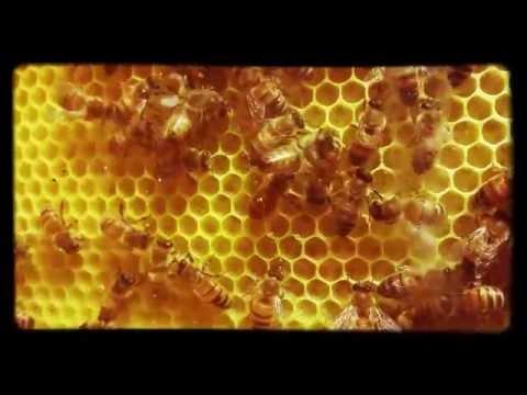 Bijen op wasraam achter glas