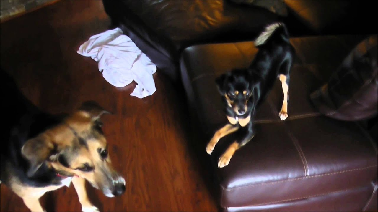 how to keep two dogs from fighting