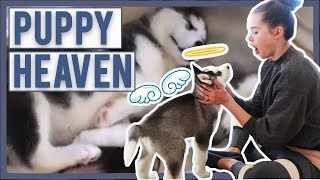 We Did Puppy Yoga With The Kids   Serious Cuteness Overload