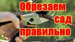 видео Как правильно провести обрезку плодовых деревьев в саду весной