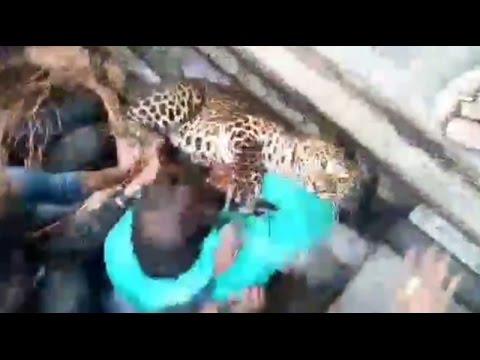 Panic In Raiganj As Leopard Roams Free On Street