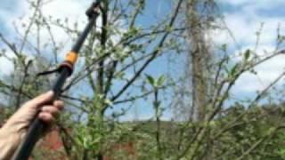 Jak správně ostříhat ovocný strom thumbnail