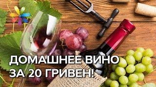 Как сделать домашнее вино? Рецепты на Новый Год