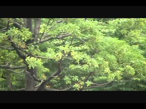 Italian Park of Minato Ward, Tokyoー港区立イタリア公園