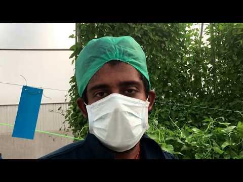 India's biggest Hydroponic Kang Kong farmer