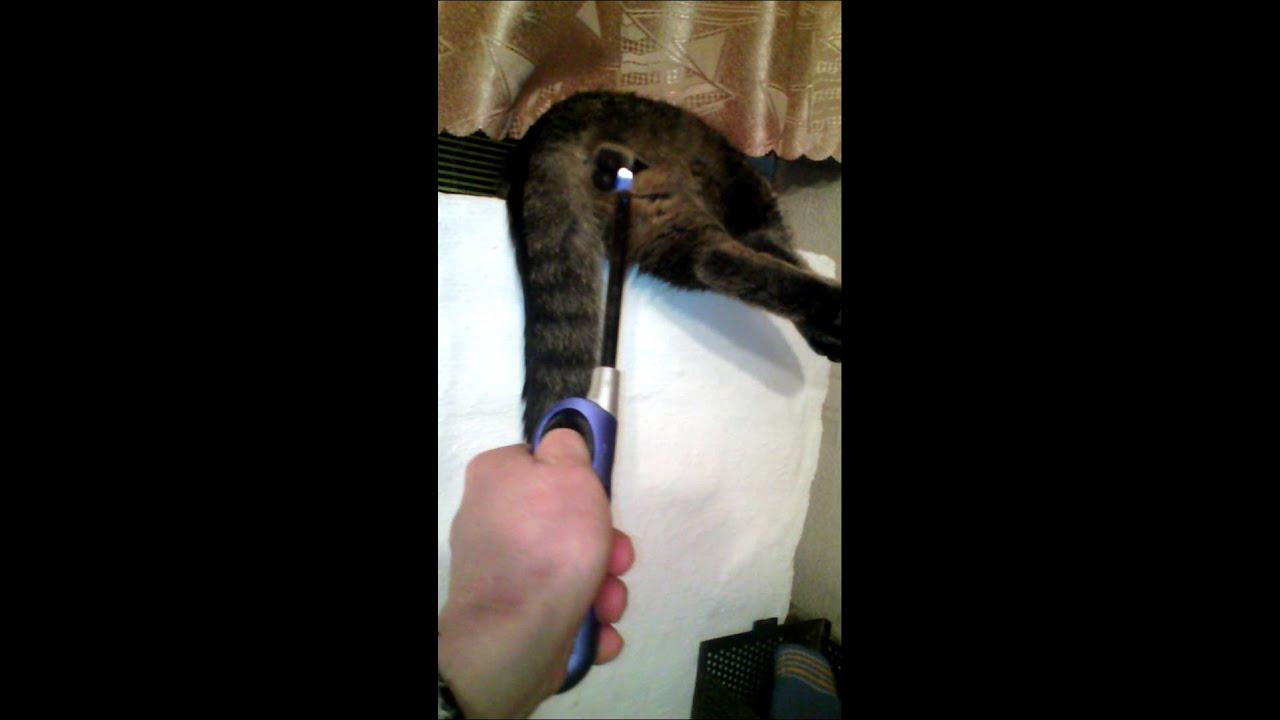 Кто такой лёша котов