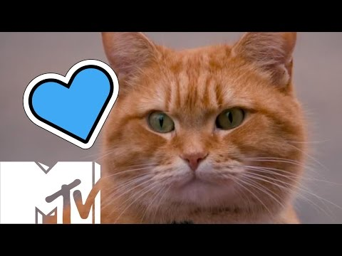 How Many Cats Did It Take To Make 'A Street Cat Named Bob'? | MTV