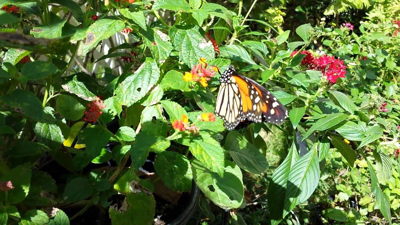 La marquesa guaynabo puerto rico mariposario youtube for Actividades en el jardin botanico de caguas