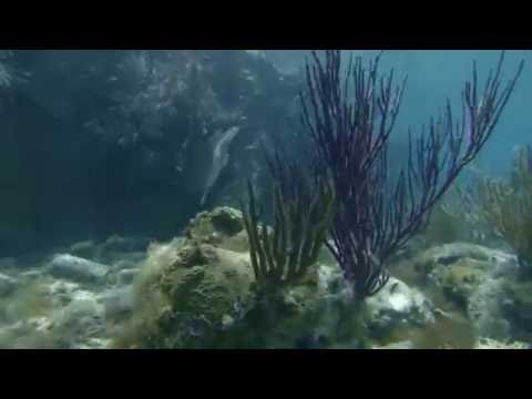 Snorkeling Around Fort Jefferson, Dry Tortugas National Park (RAW)