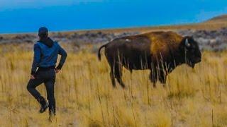 RIDING A WILD BISON! (INCREDIBLY DANGEROUS!!!) w/ Shonduras, Corey Scherer, Sam & Colby! Video