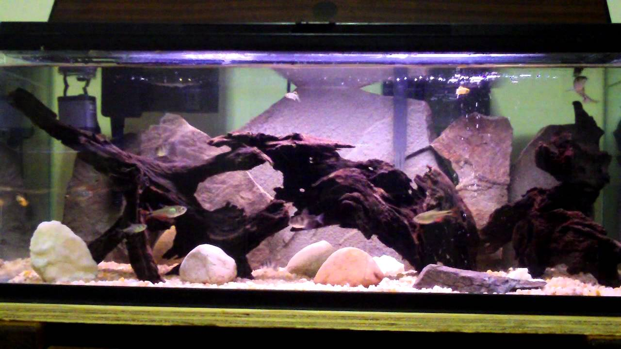 Freshwater Driftwood And Stone 20 Gallon Long Aquarium Youtube