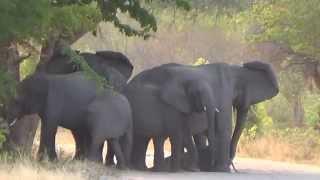 Over speeding kills a baby Elephant