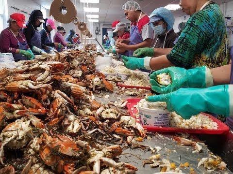 Limits On Seasonal Work Visas Hit Maryland's Crab Industry