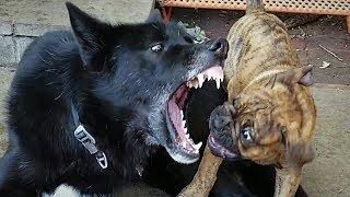 Puppy ATTACK!!! K9 Battle Royal!!!