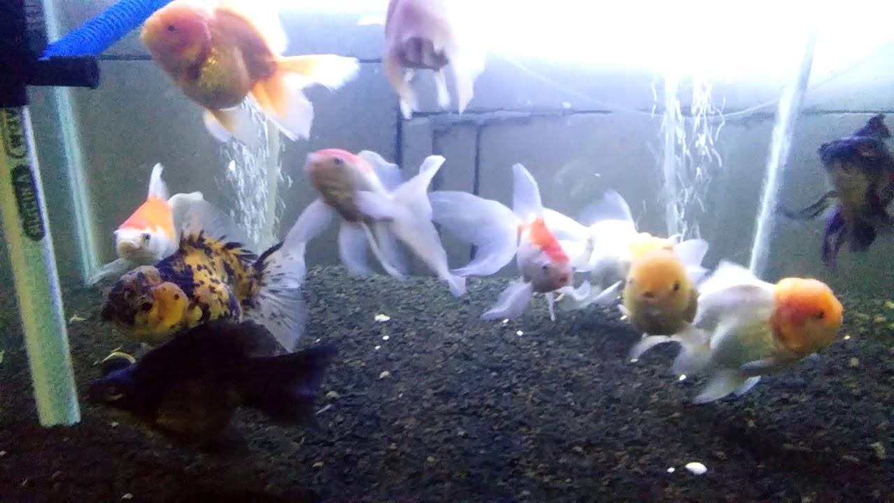 aquarium mas koki undergravel youtube rh youtube com