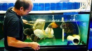 ASIAN FISH Flea Market Full of AMAZING EXOTICS!