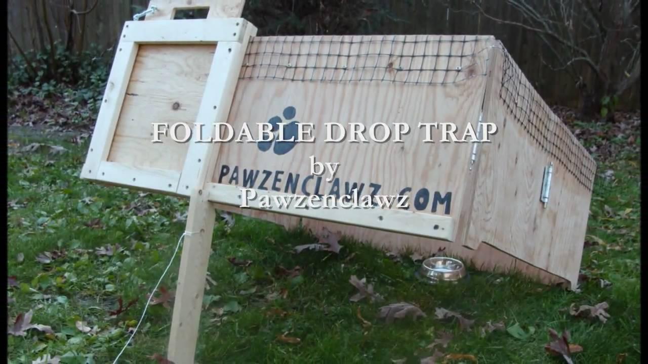 Youtube Cat Drop Trap