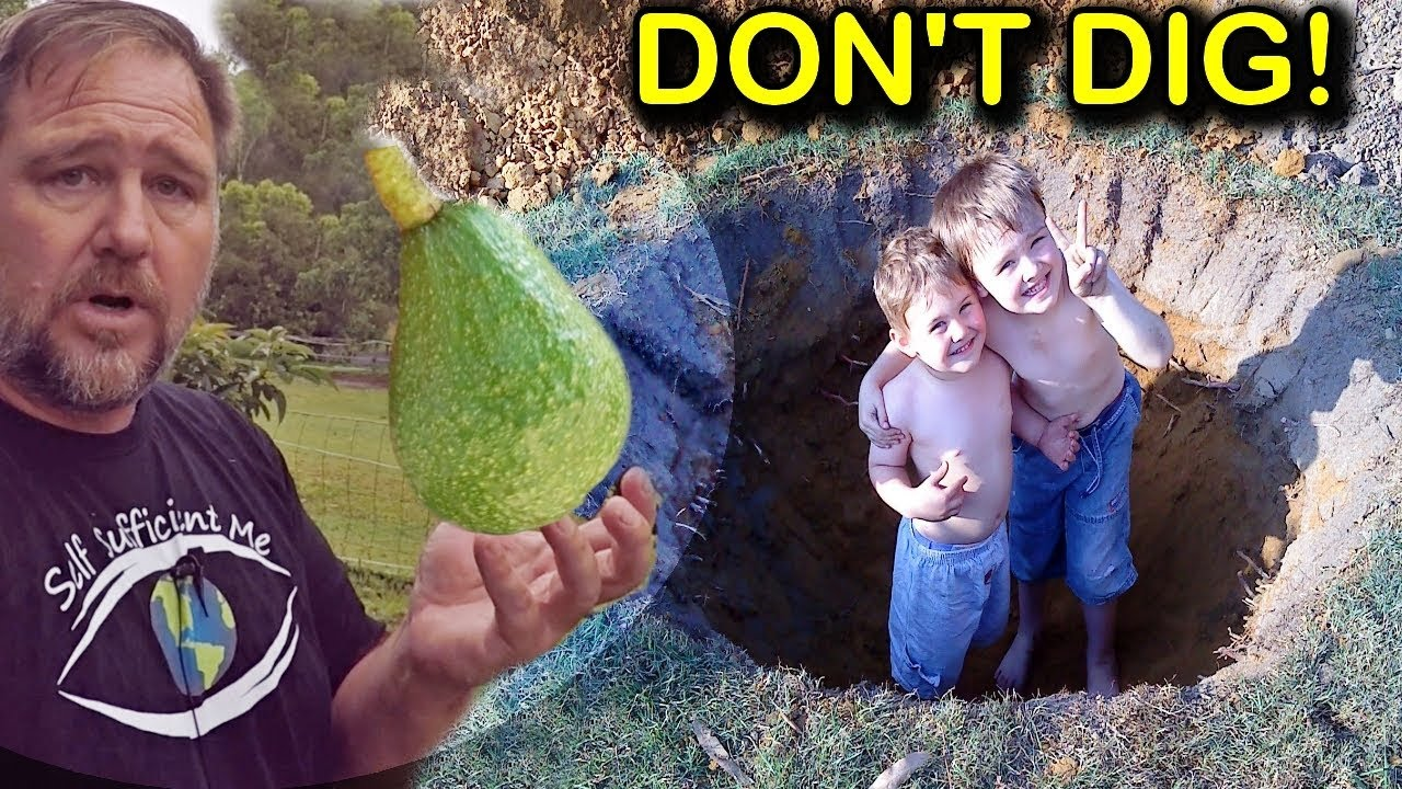 How To Grow Plant Avocado Trees In Poor Drainage Or Clay Soil