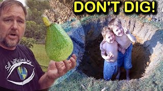 How to Grow & Plant Avocado Trees in Poor Drainage or Clay Soil