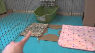 How to set up your rabbits cage
