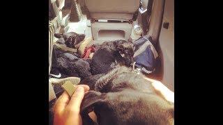 Путешествие в Одессу! Едем на бусе с собаками на море!