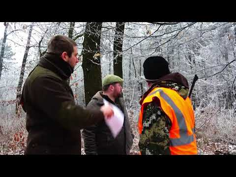Driven Wild Boar Hunting In Hungary