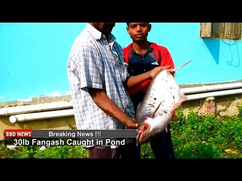 Fishing in Sylhet, Bangladesh HD 1080p