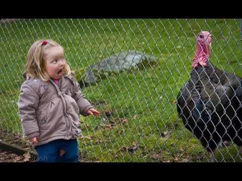 Baby and Animals funny videos - Hilarious Animals Trolling babies and kids Compilation
