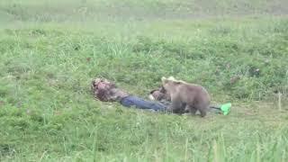 На Камчатке любопытный медвежонок разбудил приятелей, уснувших на пляже