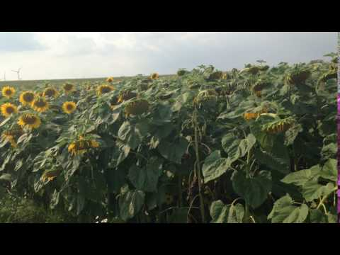 Austria - Czech Republic road, flower land (Bike Eurotrip 2016)