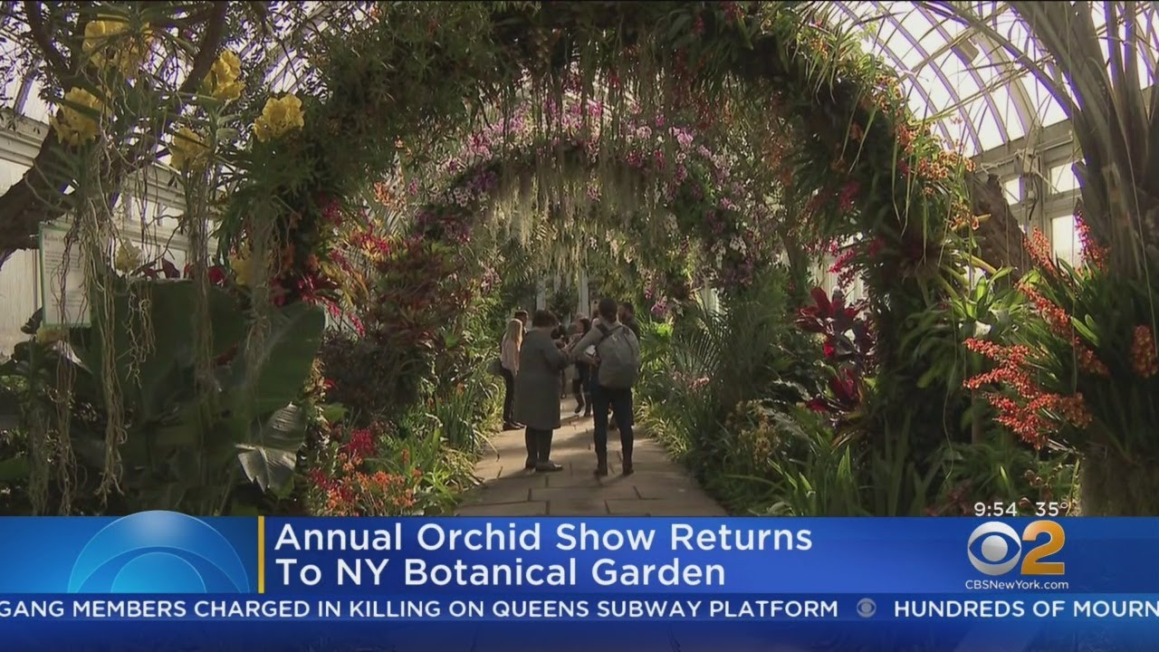 Nyc Orchid Show Opens Youtube