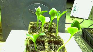 Time Lapse of Zucchini  growing from seed.