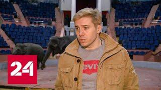 Драка слонов: небывалое зрелище увидели посетители в цирке Казани. Научпоп - Россия 24