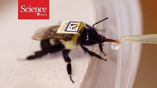 New tracking system could show—at last—how pesticides are harming bee colonies