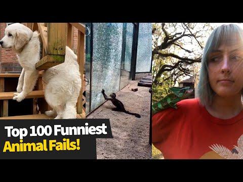 Top 100 ULTIMATE Funniest Animal Fails Compilation | Funny Pet Fails