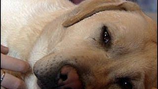 10 Perros héroes que se sacrificaron