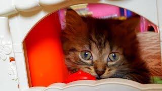 Домик для котенка своими руками за 5 минут! Но что-то пошло не так:) Котенок в шоке! Но доволен:)
