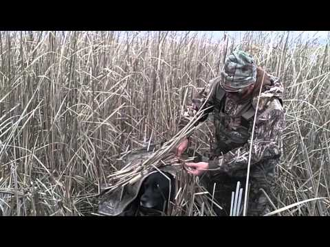 Duck Hunting: How To Hide Your Dog