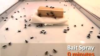 Tips to Control Flies Pest Control West Auckland