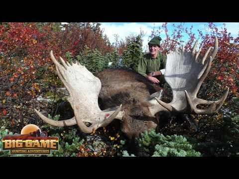 Moose Hunting In Canada | Big Game Hunting Adventures