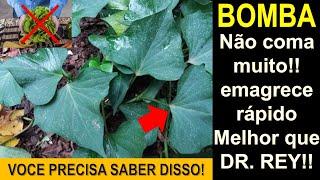 O incrível poder da folha da batata doce – Não jogue fora nunca mais – Aproveite-as