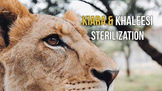 Kiara & Khaleesi Sterilization Dean Schneider