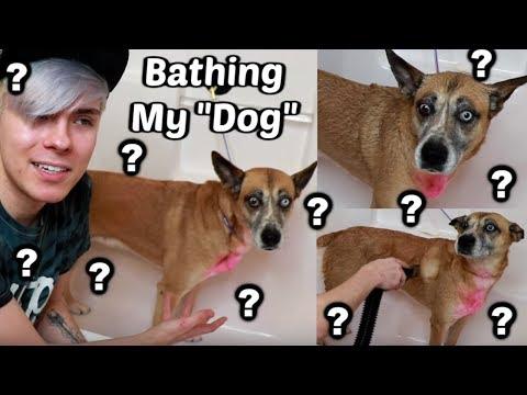 Giving My Very Strange Dog a Bath