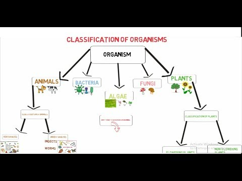 Classification of  Organisms on earth |  living organisms for kids