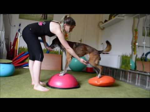 Dogfitness with Daeron