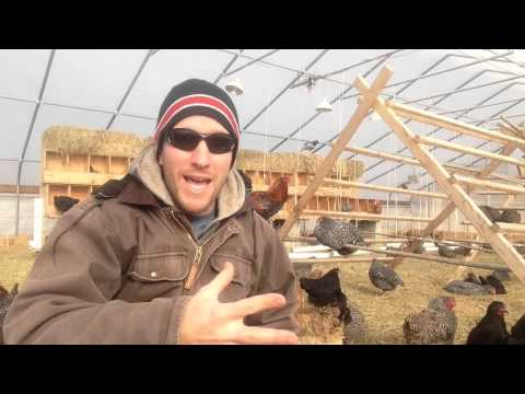 250 egg laying chickens in January