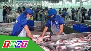 Cá tra Việt xuất sang Mỹ tăng mạnh vì Covid-19 | THDT