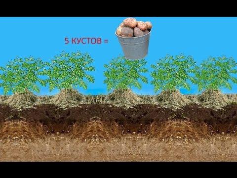 Выращивание картофеля по-новому с применением 91