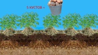 Новый метод выращивания картофеля под сеном, и в мешках. Огород для ленивых на двух сотках.(Выращивание экологически чистого картофеля, по новой технологии под сеном и в мешках, не используя удобрен..., 2016-01-03T18:33:27.000Z)