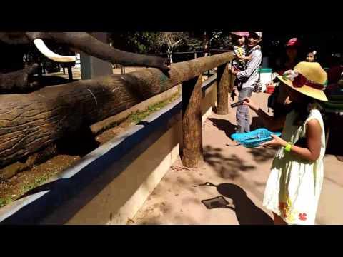 Yangon Zoo March 2017